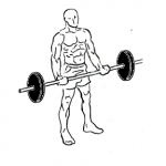 Barbell Curl Exercise For Arms In Hindi