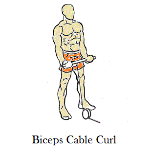 Biceps Cable Curl