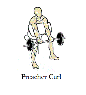 Preacher Curl Exercise
