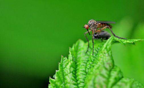 मच्छरों से छुटकारा कैसे पाये